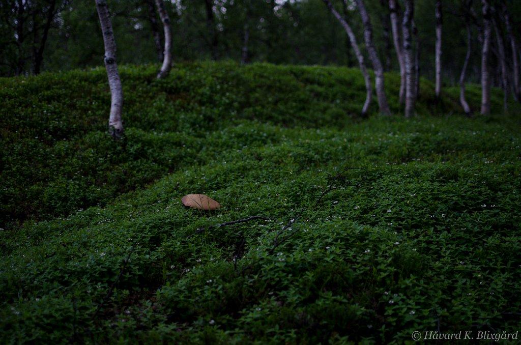 HiX-20120723-231323-Koken.jpg